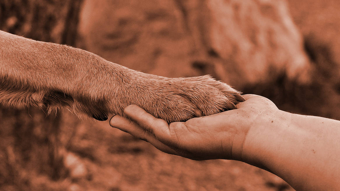 Zampa di cane su mano di persona, segno di accordo e amicizia